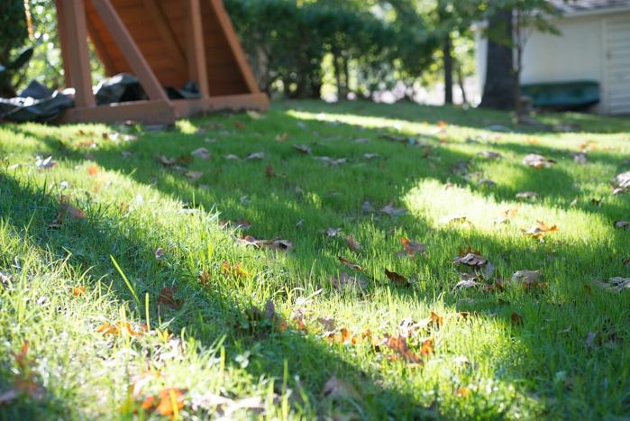 grass after 8 days closeup