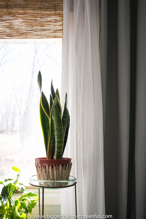 Adding plants to the master bedroom on the cheap