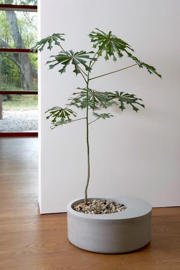 Modern Planter in Living Room Design