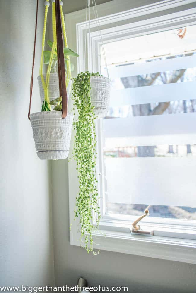 String of Pearls in a hanging planter in bathroom