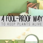 You won't kill plants this way... promise! www.biggerthanthethreeofus.com