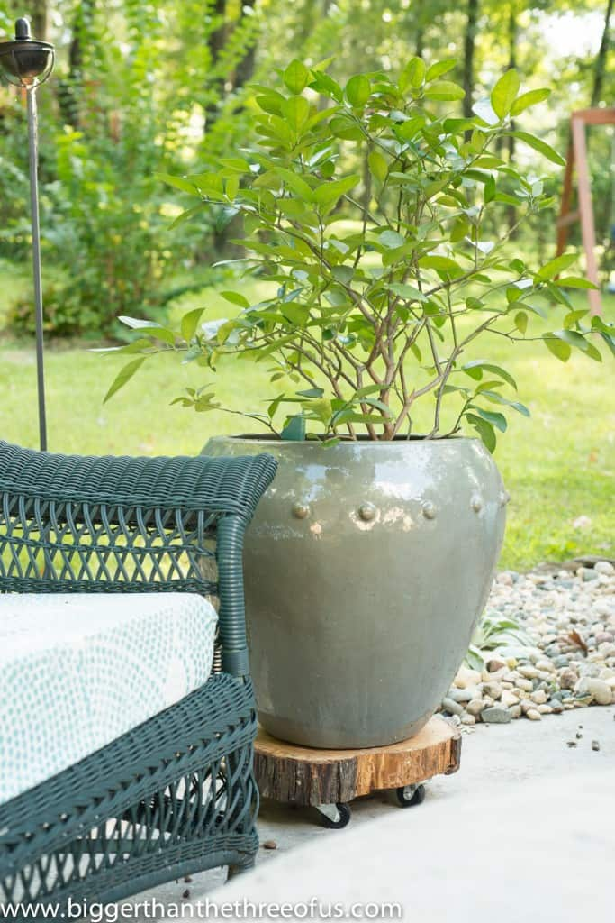 DIY Rolling Plant Stand Out of A Tree Stump
