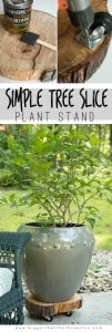 DIY This Heavy-Duty Rolling Plant Stand out of A Tree Stump!