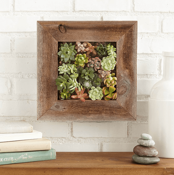 Living Wall Art from Uncommon Goods