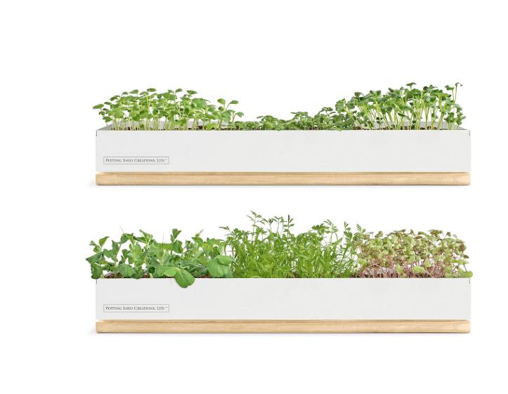 Micro Green Growing Kits