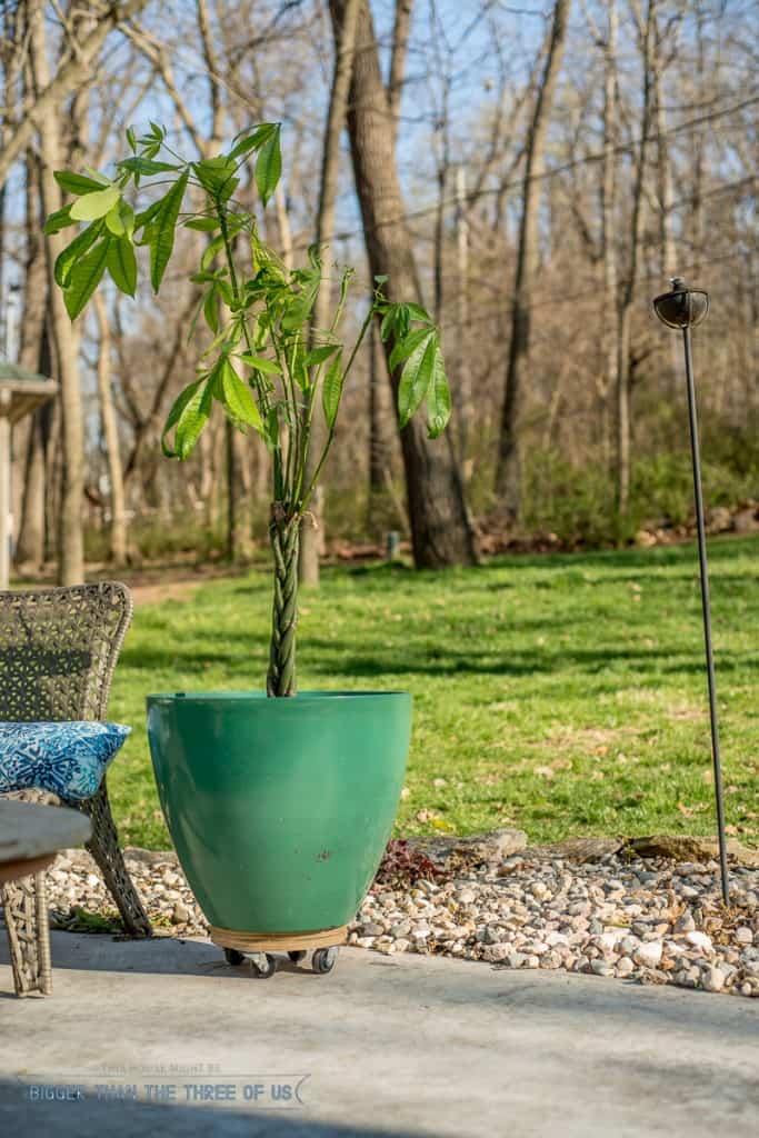 DIY Scrap Wood Plant Stand