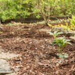 How to Create A Shade Lover's Garden