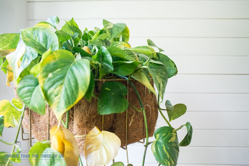 Mid-Century Inspired Planter