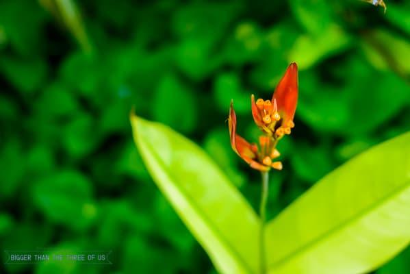 Plants around costa rica