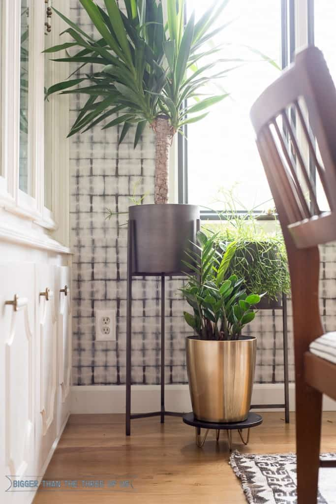 Common house plants showing the ZZ plan in dining room