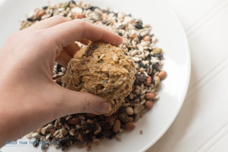 Did you know that making birdseed balls was super easy? Use this tutorial to make some for all the birds in your yard!