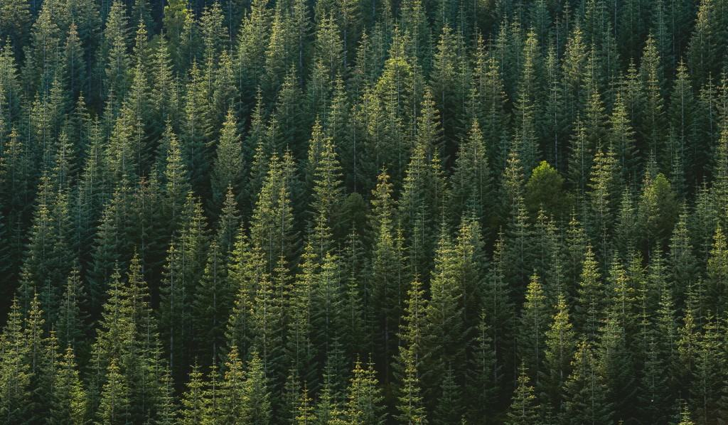 Aerial photo of a forest free art print