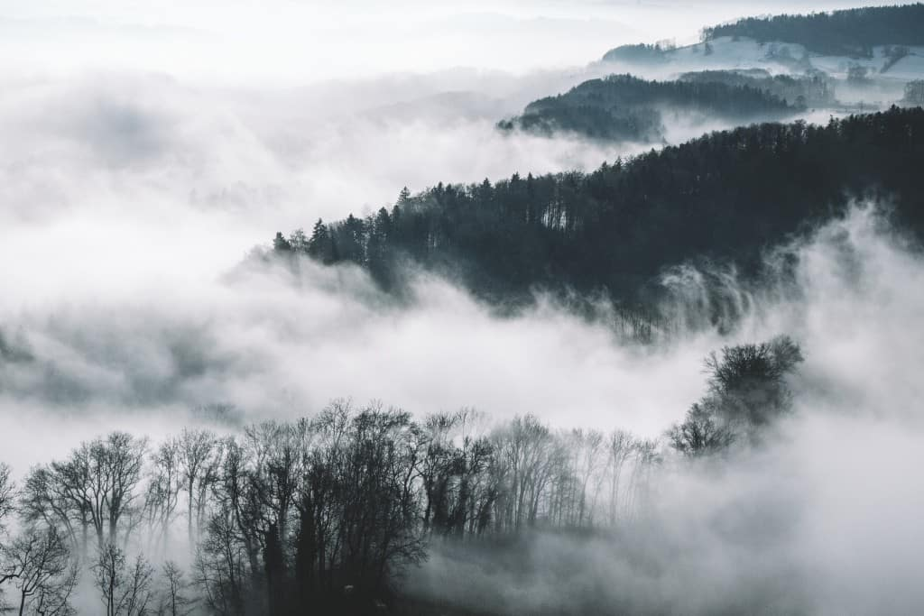 Fog covered forest free wall art