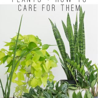 5 Easy Houseplants and How to Care For Them
