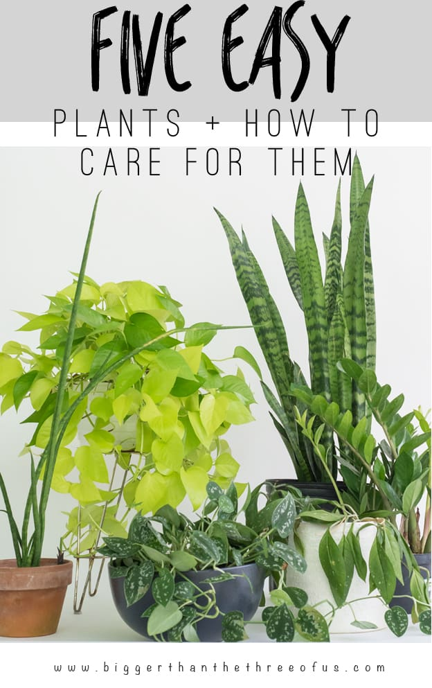 5 easy houseplants and how to care for them bigger than the three of us - Easy care indoor plants ...
