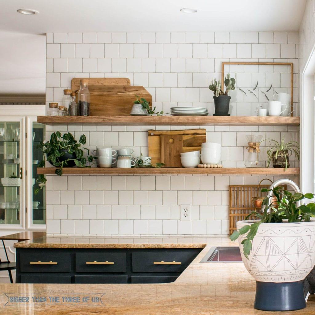Plant Care 101: Top 10 houseplants