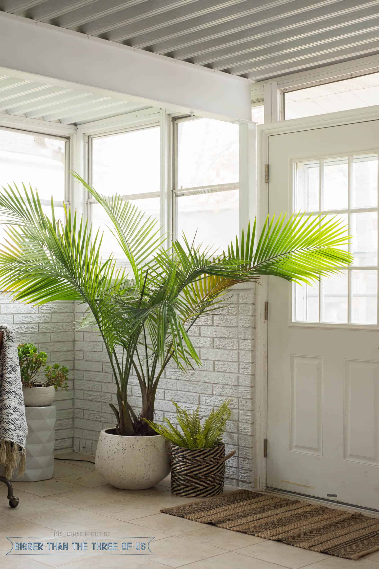 White Painted Brick in sunroom corner by door with large palm tree and a small fern in a black and white basket.