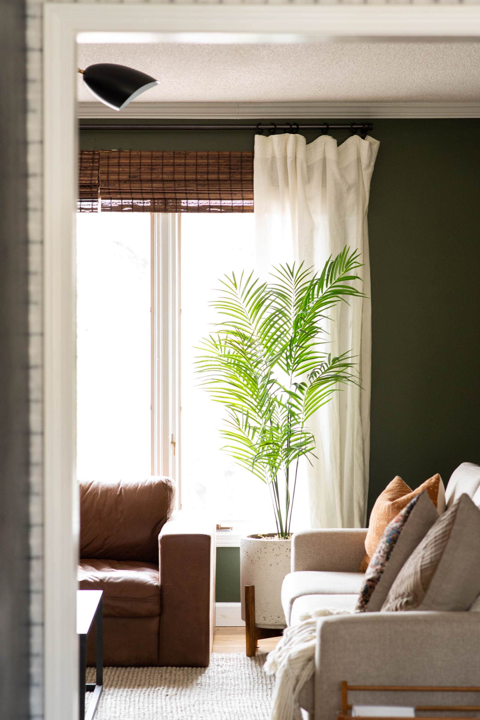 Living Room Window with a plant and a leather couch in front.