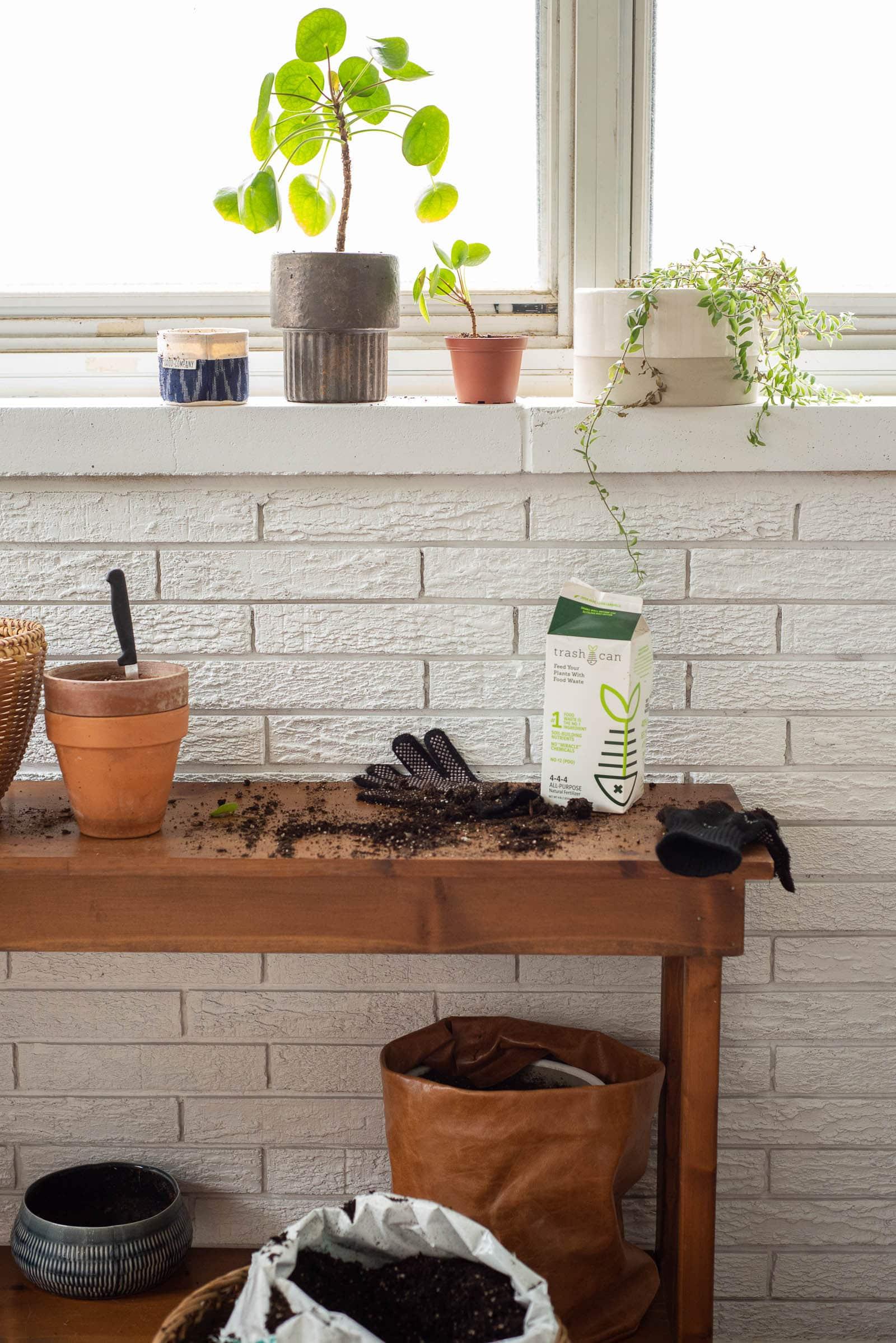 planting spot in sunroom