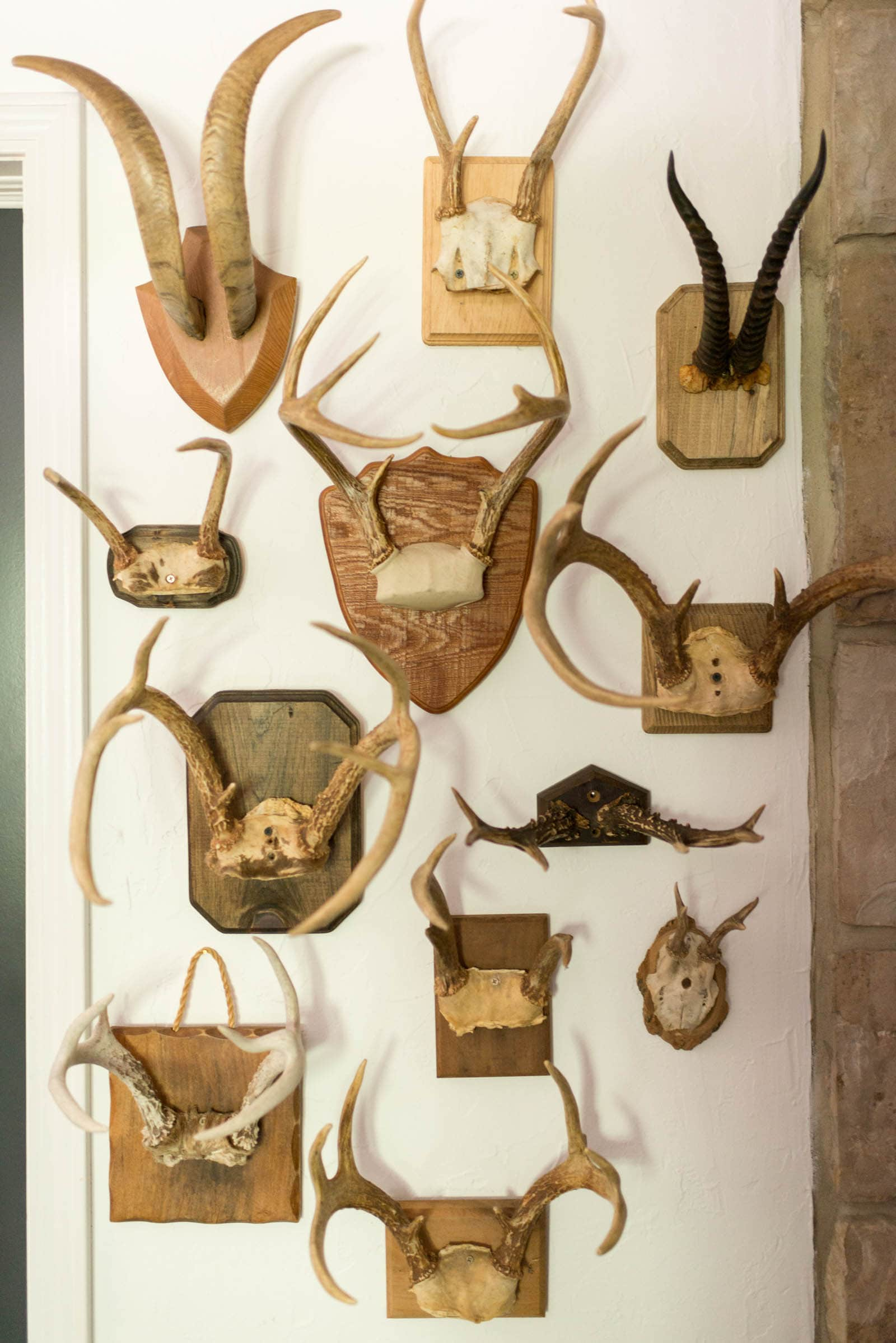 Antler Gallery Wall
