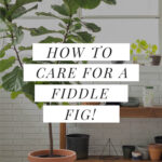 caring for a FLF