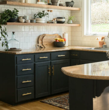 common house plants shown in kitchen