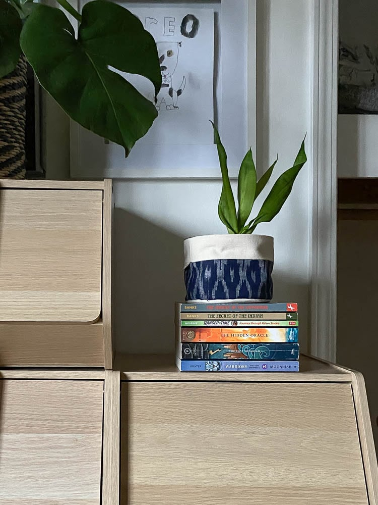 books on bookcase in kid's room with snake plant on top