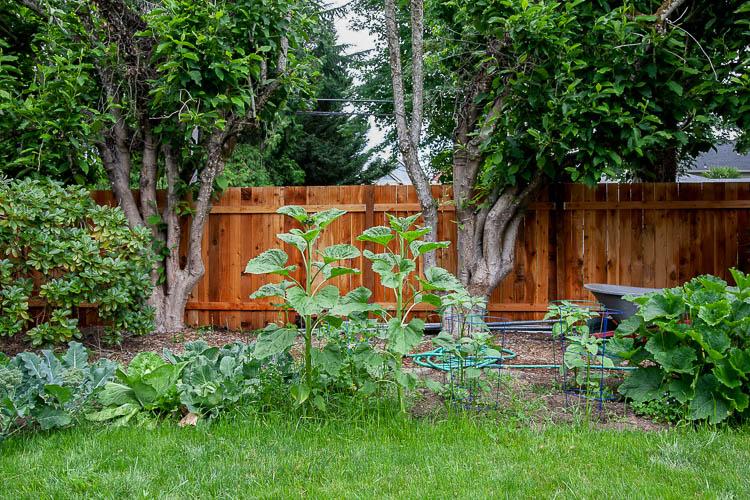 photo of Growing a garden directly in your yard   Beginner Vegetable Garden Tips