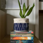 4th grade book recommendations on bookshelf with snake plant on top