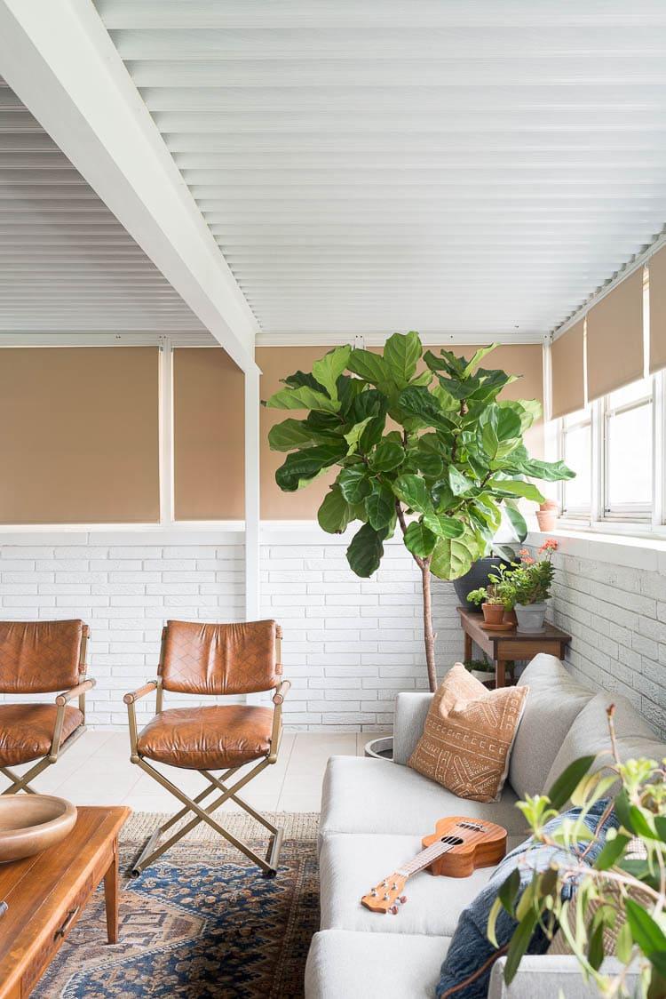 Fiddle leaf tree in four seasons room