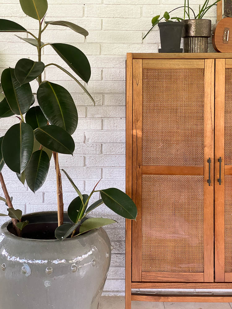 Four seasons room with a large rubber tree and office storage