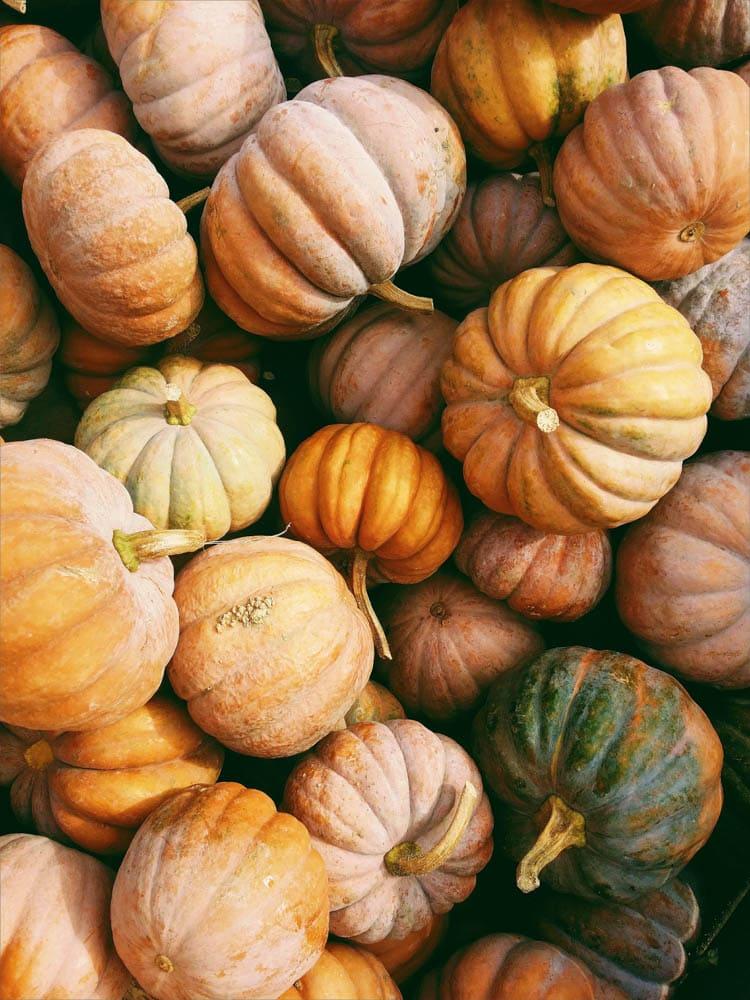 collection of pumpkins as Halloween art