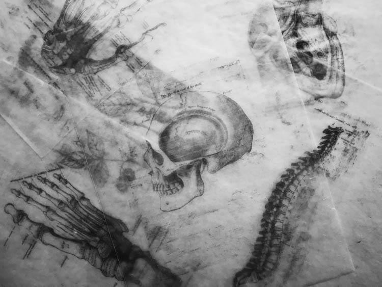 skull diagram art